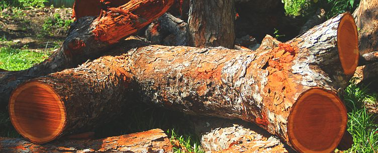 Raw Mahogany Wood ~ Medford mahogany craft world barbados