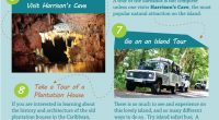 Top Things To Do in Barbados – Infographic