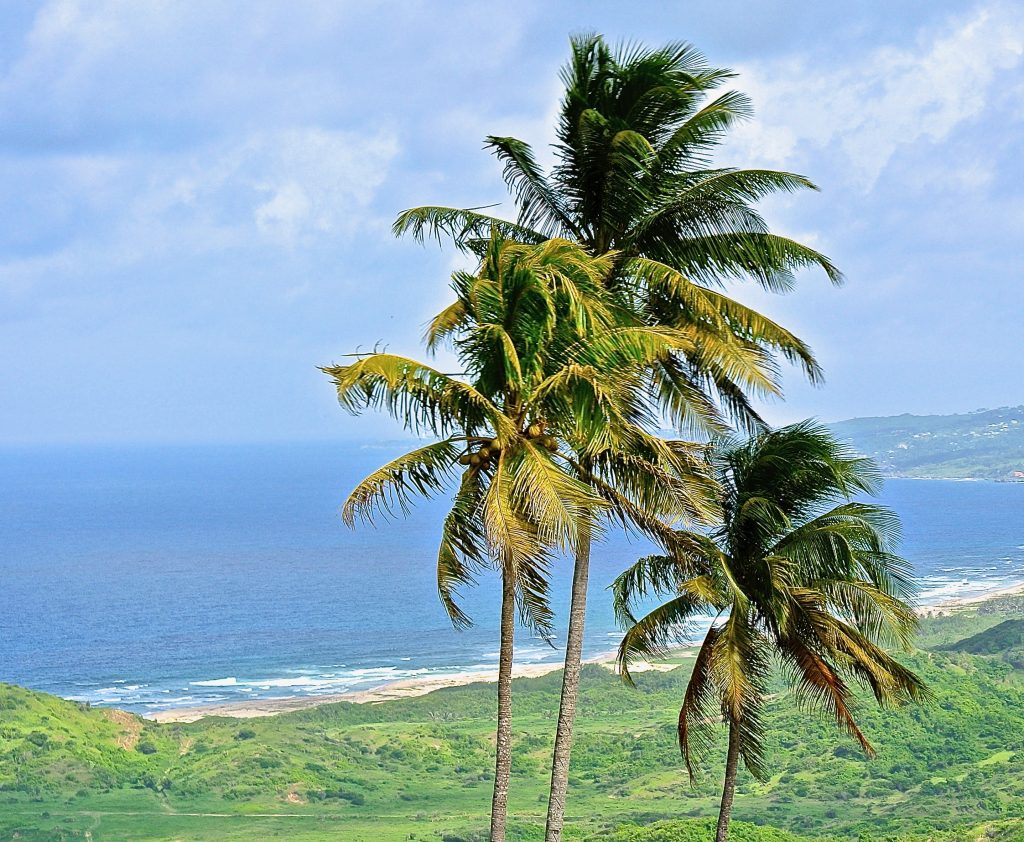 hotels cant be higher than the tallest coconut tree - Not so for the Barnbados Hyatt Development