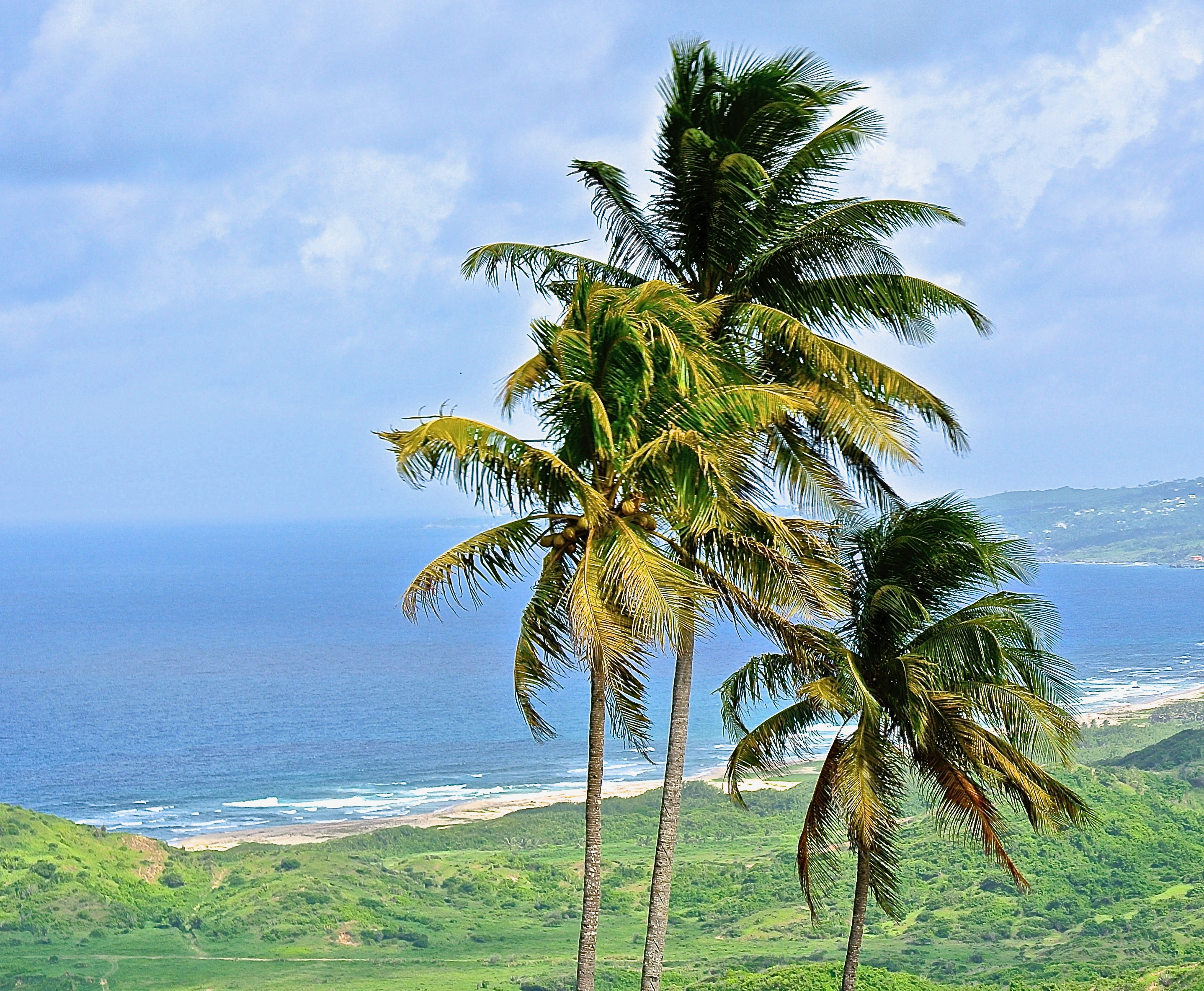 Wild and windy Bathsheba