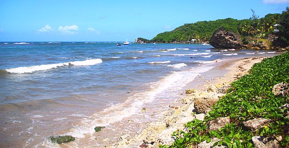 Conset Bay Barbados