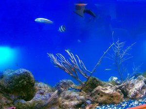 Seawater Aquarium at Folkestone