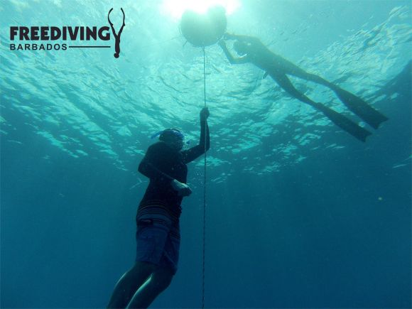 Freediving Barbados