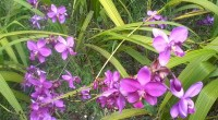 Orchid World, Barbados: Caribbean tropical beauty