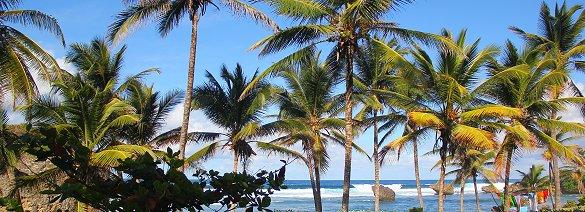 Barbados... a tropical Caribbean paradise!
