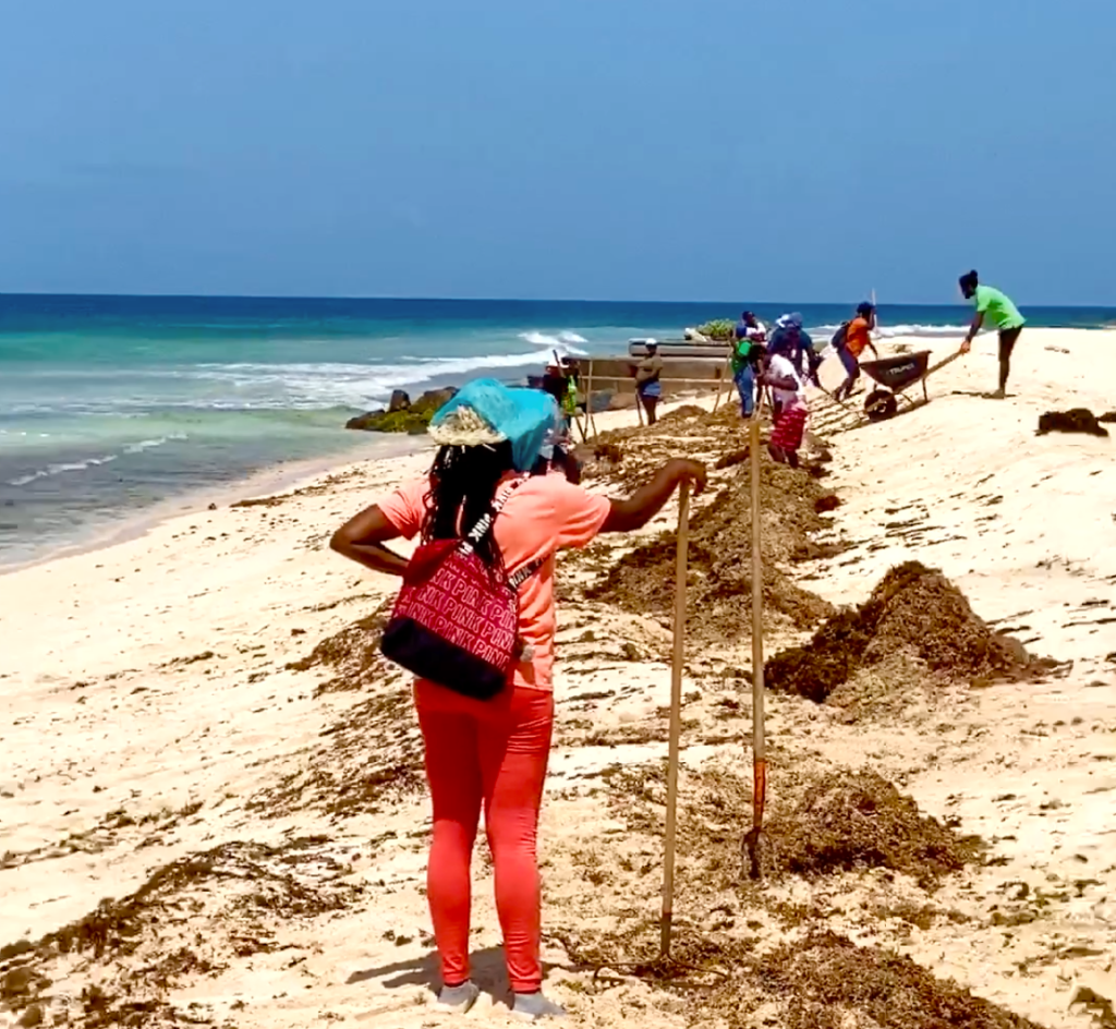Managing the Sargassum Menace