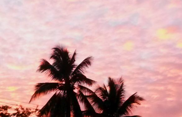 Tropical Sunset Hues
