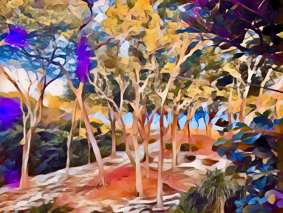 abstract of trees leading to the beach and ocean