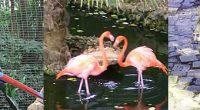 Barbados Animal Adventures