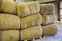 Barbados crops - cotton bales