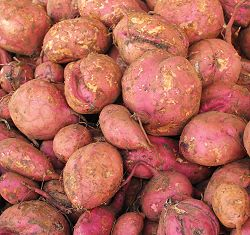 Barbados crops - sweet potatoes