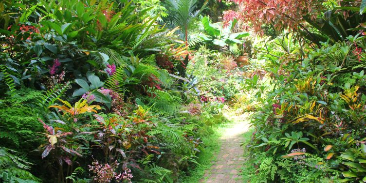 Pathway at Huntes Gardens, Barbados
