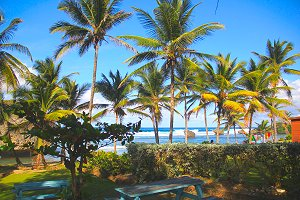 Palm trees in paradise.. awaiting your arrival