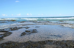 Tide pools in Barbados