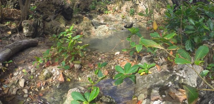 Streams at Bath Beach
