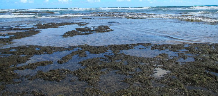 Tidepools on the east coast