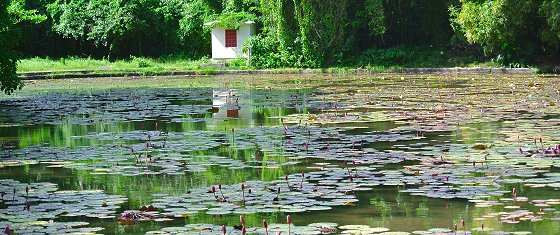 Lily pond at Codrington College, Barbados