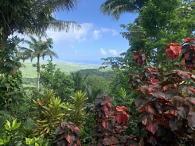 One of the views at Flower Forest Botanical Gardens Barbados