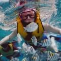 Barbados' Best Snorkeling Beaches