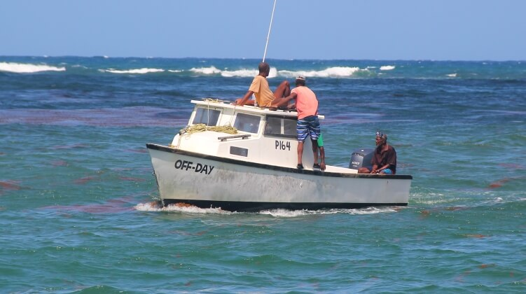 No off day for these Barbados fishermen
