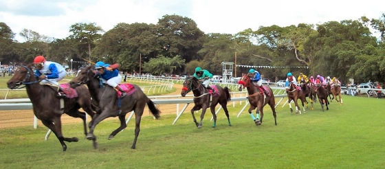 Horse racing, a pouplar sport for fans and visitors vacationing in Barbados