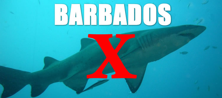 No sharks in Barbados