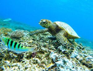 Image result for barbados snorkeling