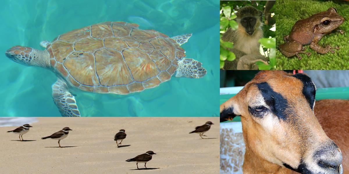Barbados Photo Gallery Wildlife