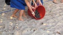 Children At Turtle Hatchling Release