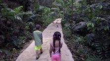Exploring Welchman Hall Gully, Barbados